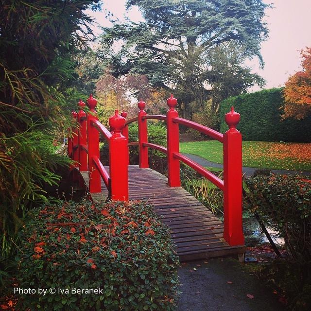 Japanese gardens, Kildare Nov 2014